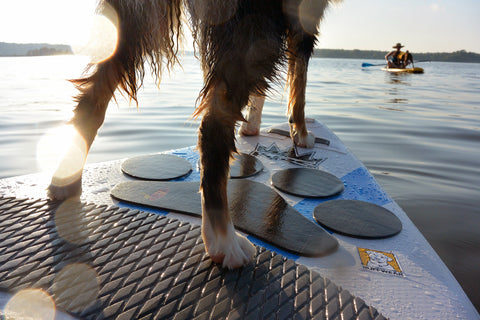 dog standing on grip mat on nose of paddleboard