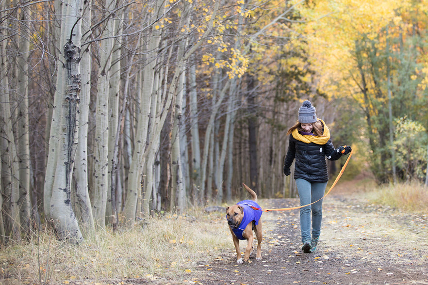 Choosing the Right Dog Jacket