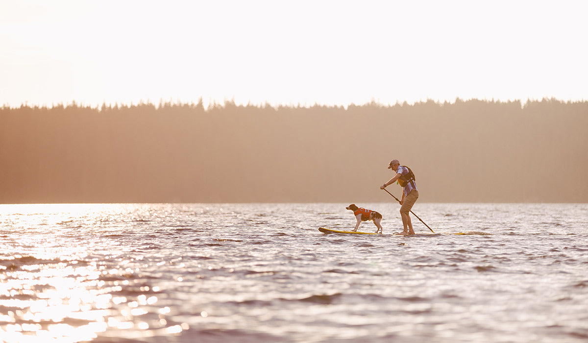 Read 5 Things Your Dog Wants To Do With You This Summer