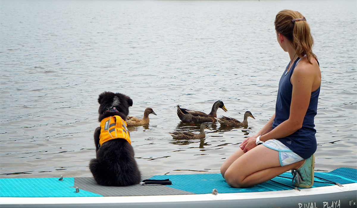 Puppy Willow in float coat sits on paddle board looking at ducks.