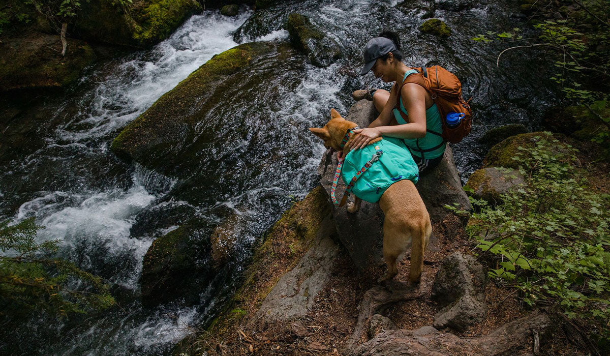 Woman and her dog in front range day pack look down on an oregon waterfall mid hike.