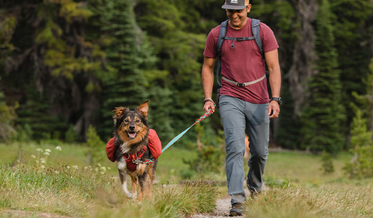 Hector hikes with dog on flat out leash and attached to front range day pack along trail.