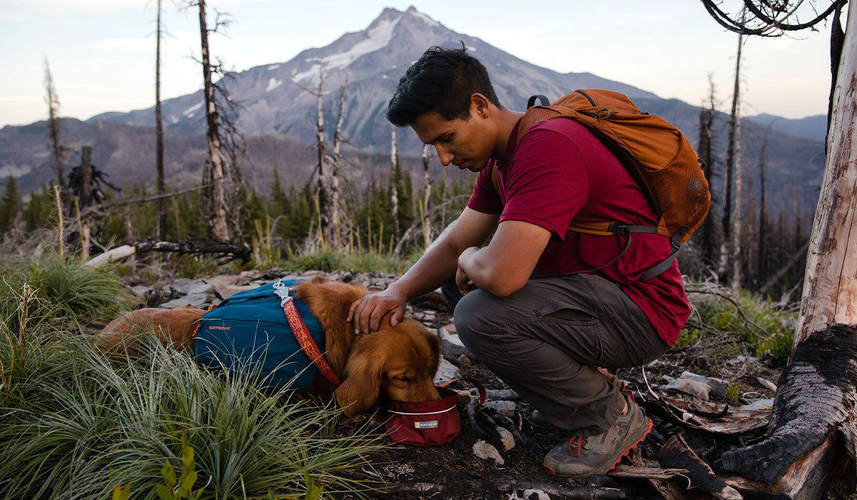 Dog in front range day pack drinks water out of quencher bowl on a hike near Mt Jefferson.