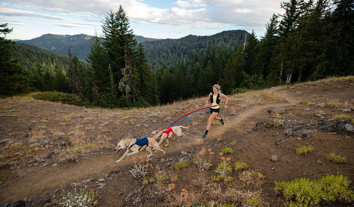 Woman trail runs with two dogs on roamer bungee leashes in switchbak harnesses.