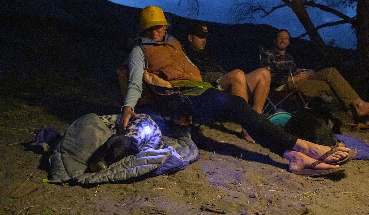 Dog in sleeping bag with safety light on at nighttime, next to their person.