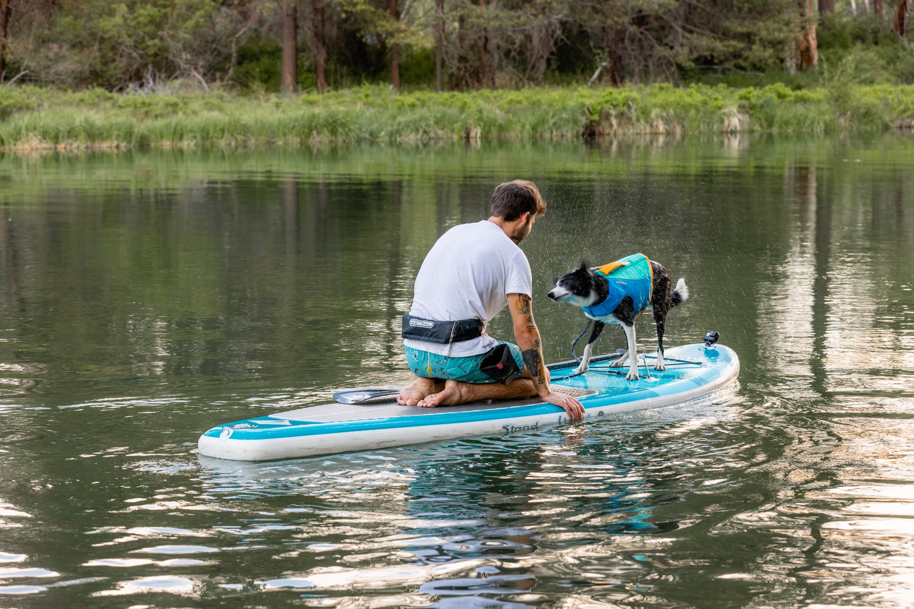 Human on paddleboard with dog shaking water off after going for a swim