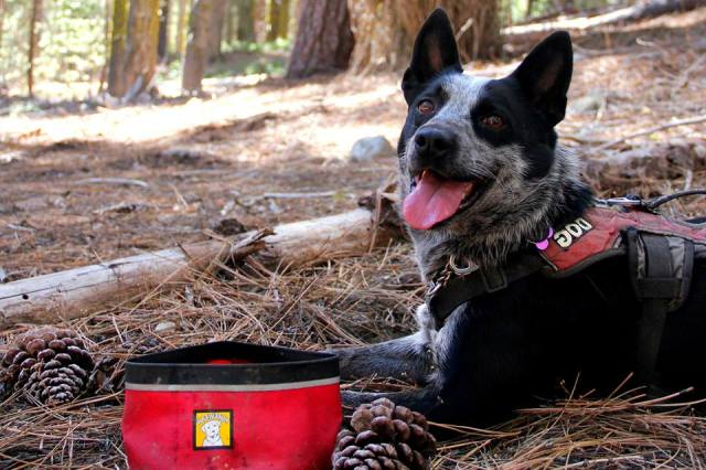 Happy dog lays on the ground on trail with packable dog bowl in the foreground.