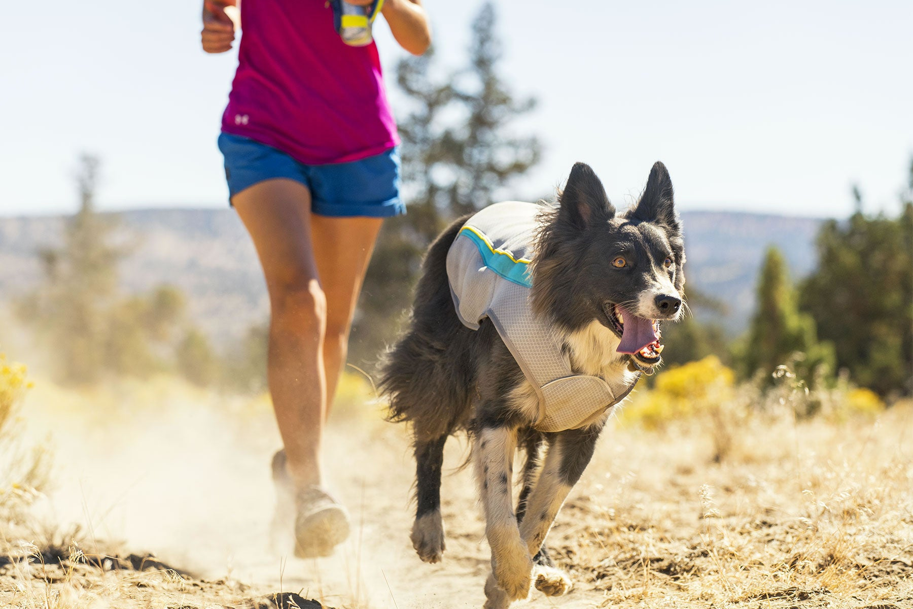 Read How To Trail Run With Your Dog
