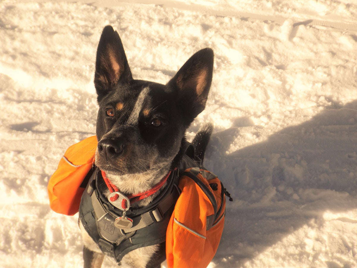 Maddie backpacking in the snow in a Palisades Pack and knot-a-collar.