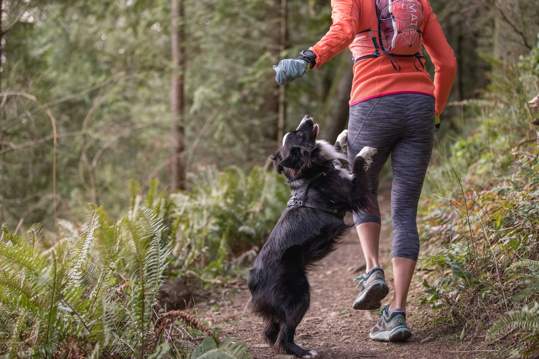 PD jumps for a treat from Krissy's hand while on a trail run.