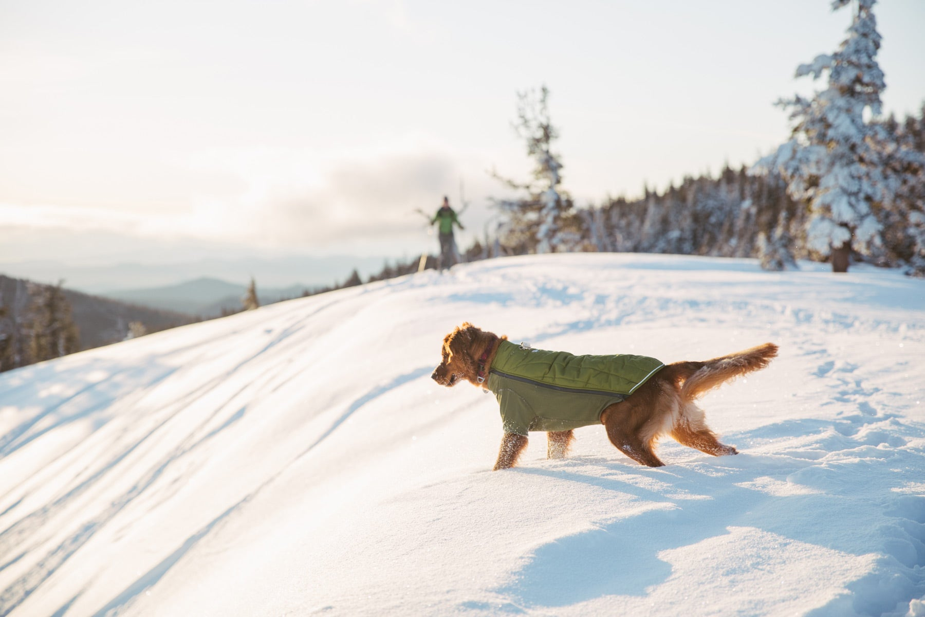 Bailey in powder hound dog jacket looks down at snowy slope with ski tracks.