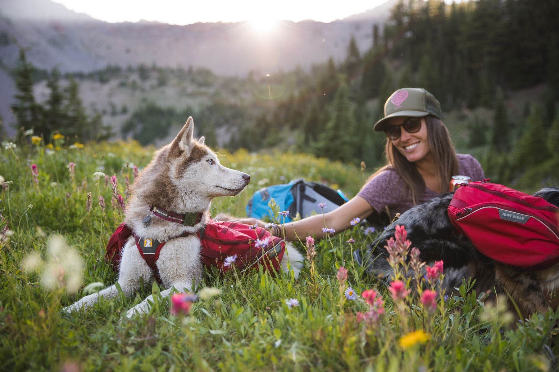 Dogs in palisades packs lay in wildflowers with human while backpacking.