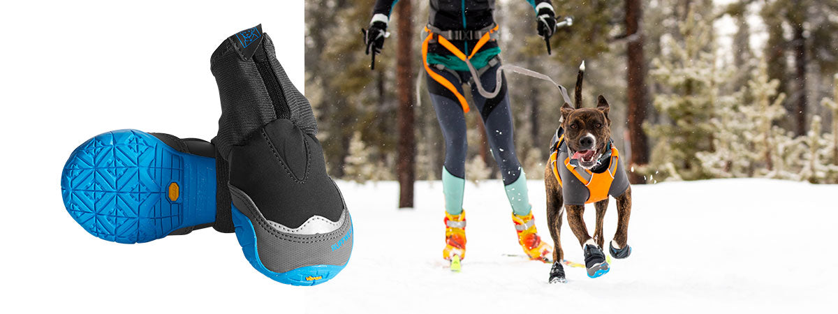 Juniper wears polar trex dog boots and Omnijore harness runs along towing human Kelly on skis.