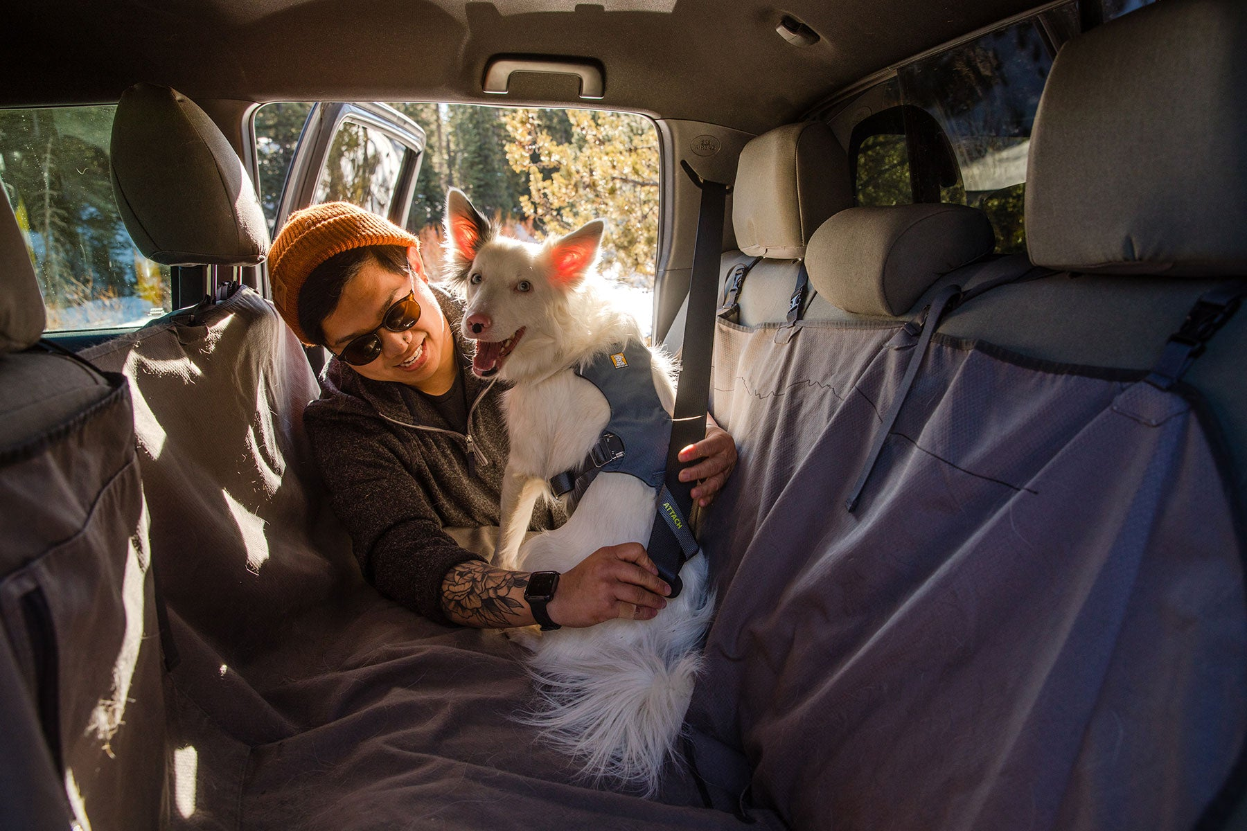Human and dog getting buckled up in a car