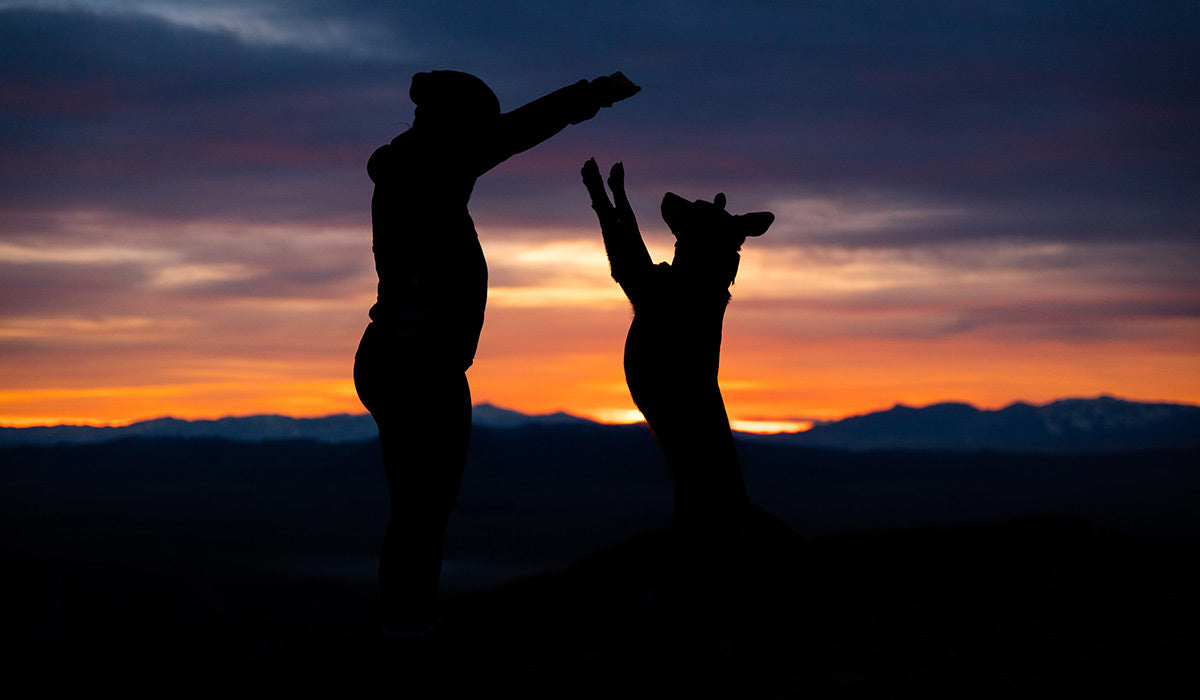 Silhouette of woman and dog jumping at sunset.