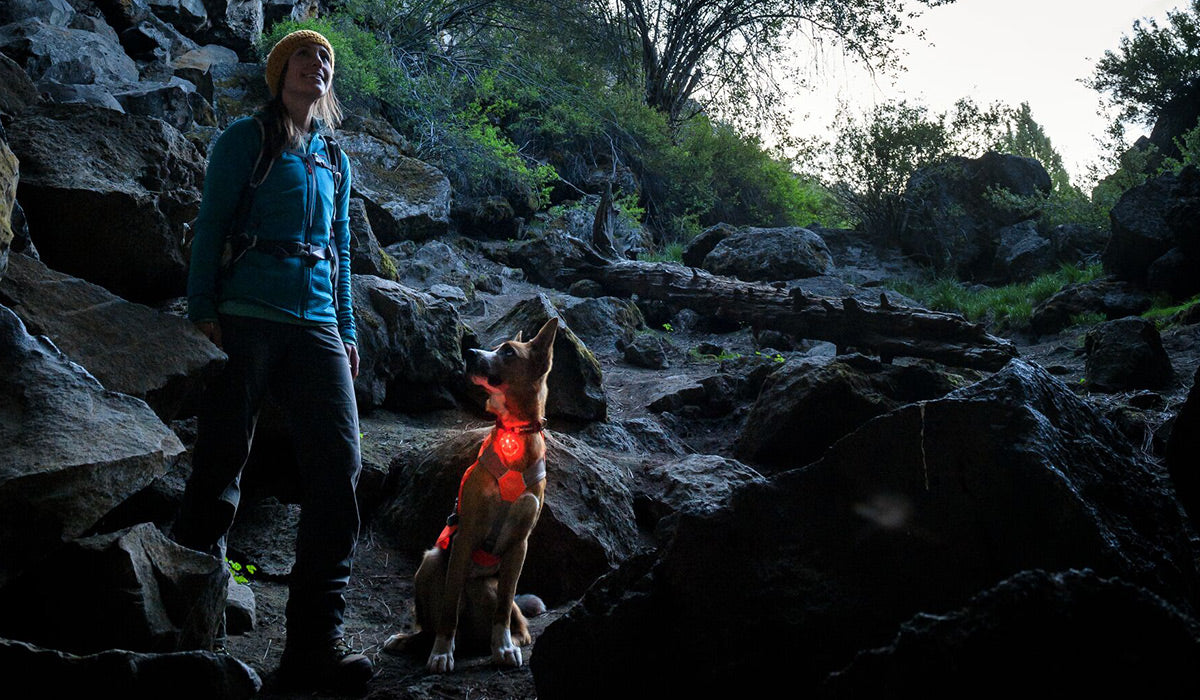 Dog lit up by the beacon light he is wearing ventures into a cave hike with woman.