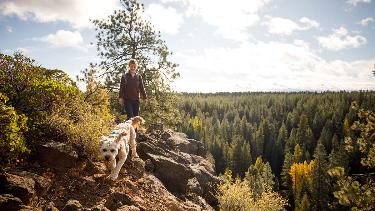 Read How To Hike With Your Dog