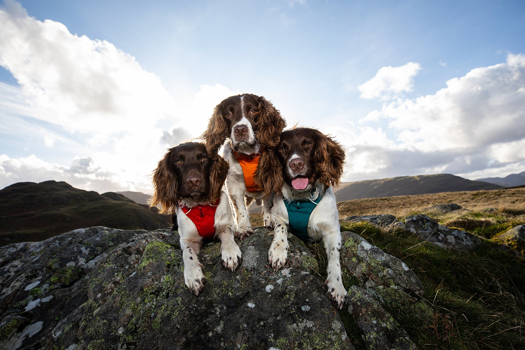 Kerry's three dogs in Ruffwear Front Range everyday padded dog harnesses laying side by side on rock.