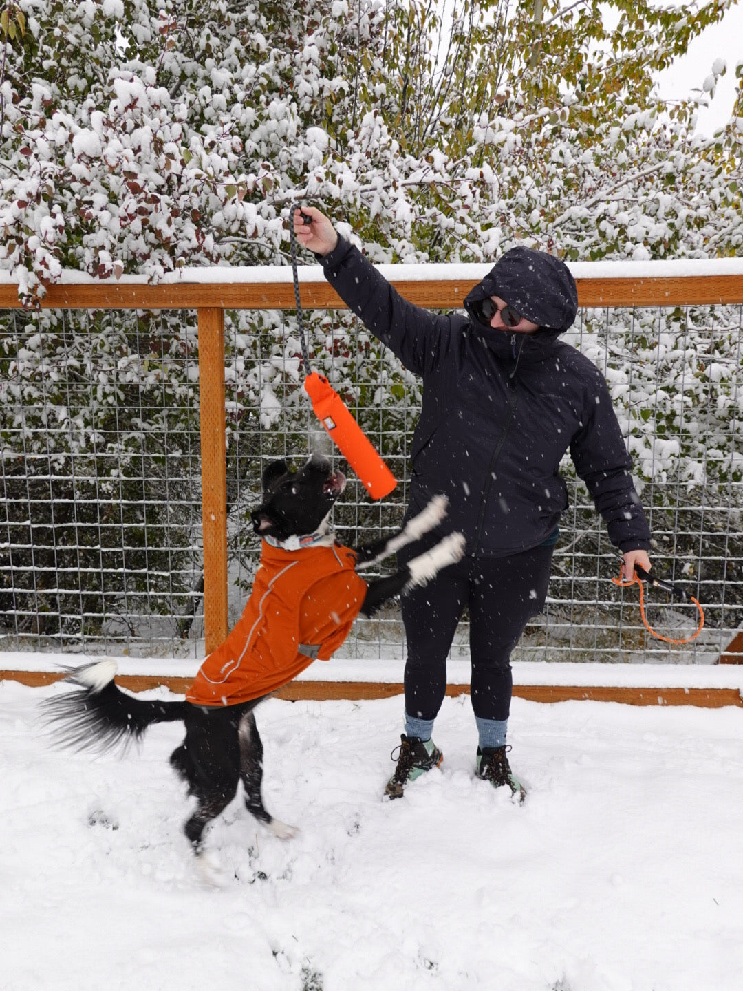 Person throws lunker for dog layered in Climate Changer fleece and overcoat dog utility jacket in snow.