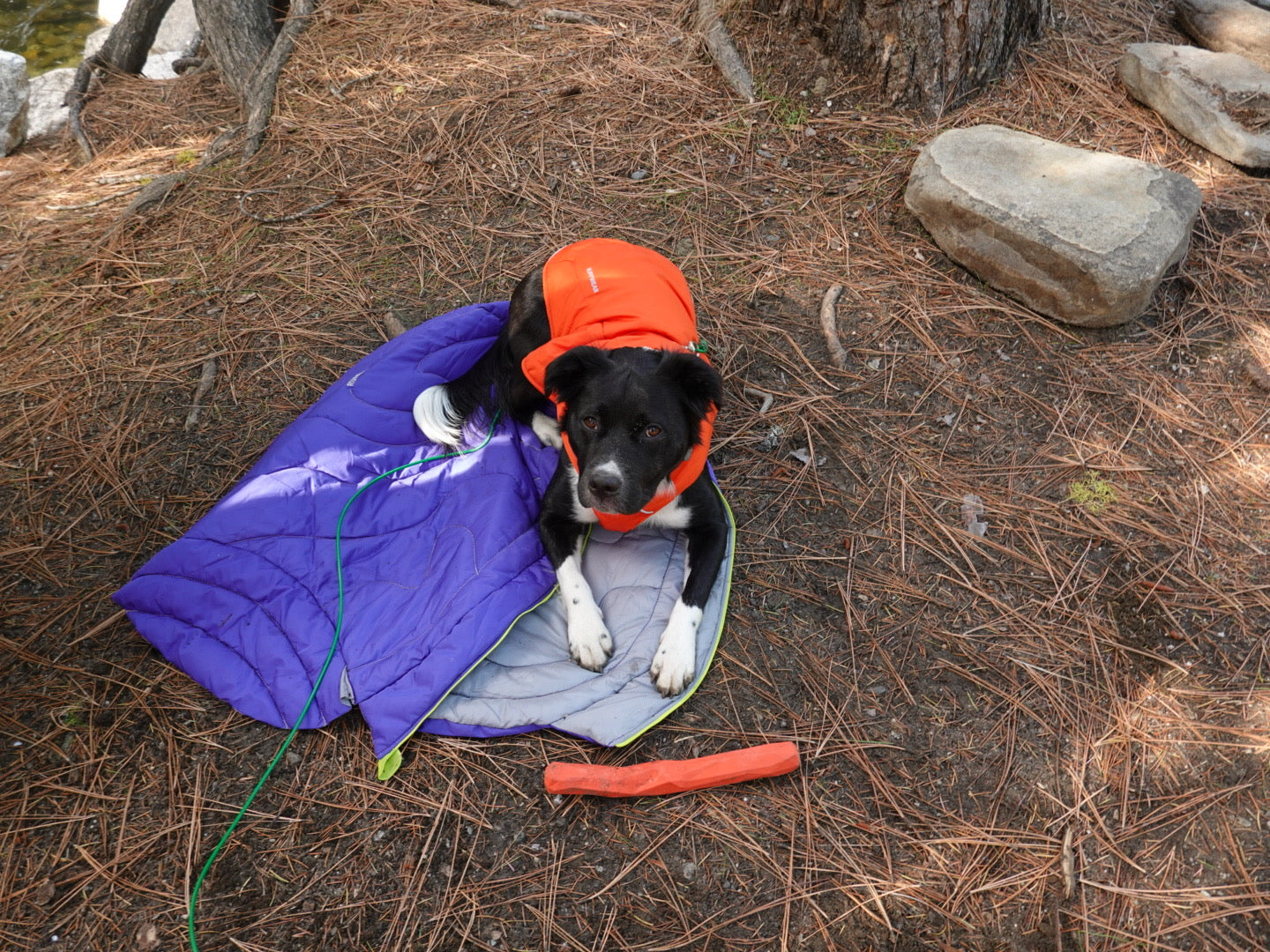 Jenny Bruso's dog on Highlands dog sleeping bag with gnawt-a-stick toy while camping.