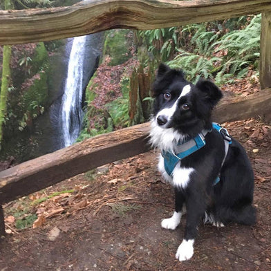 "Every town I have ever lived in I have a ""check-in run"" - the Place I run to in order to get a gauge on where things are at: seasons, fitness, trail conditions, etc. Since #sweetiePD joined my life the Chuckanut waterfall has been our check in place."