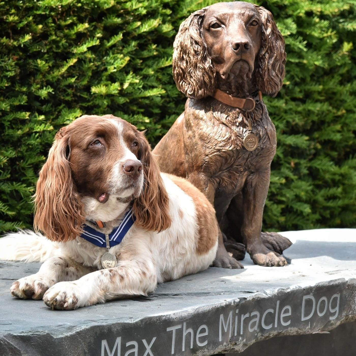 Max the miracle dog sitting by a bronze statue version of himself