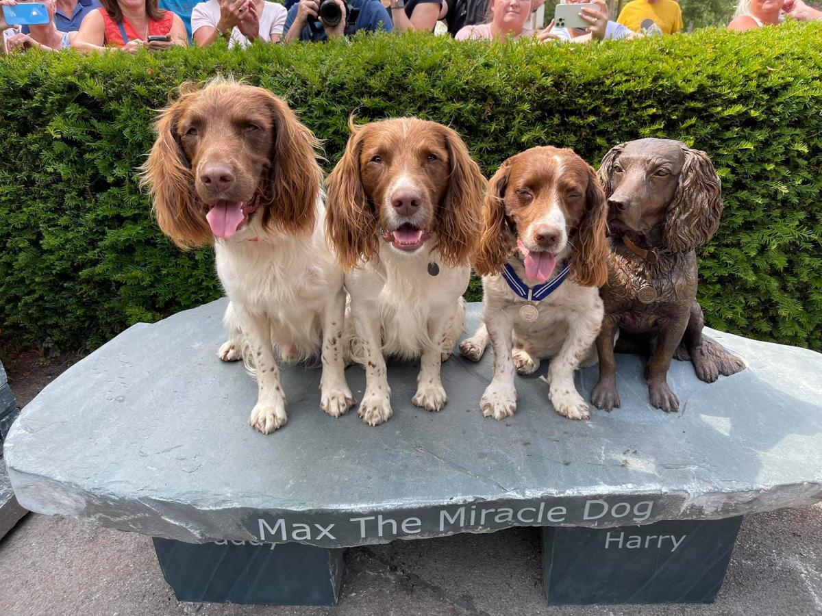 Three spaniels sit next to a bronze statue of Max the Miracle Dog