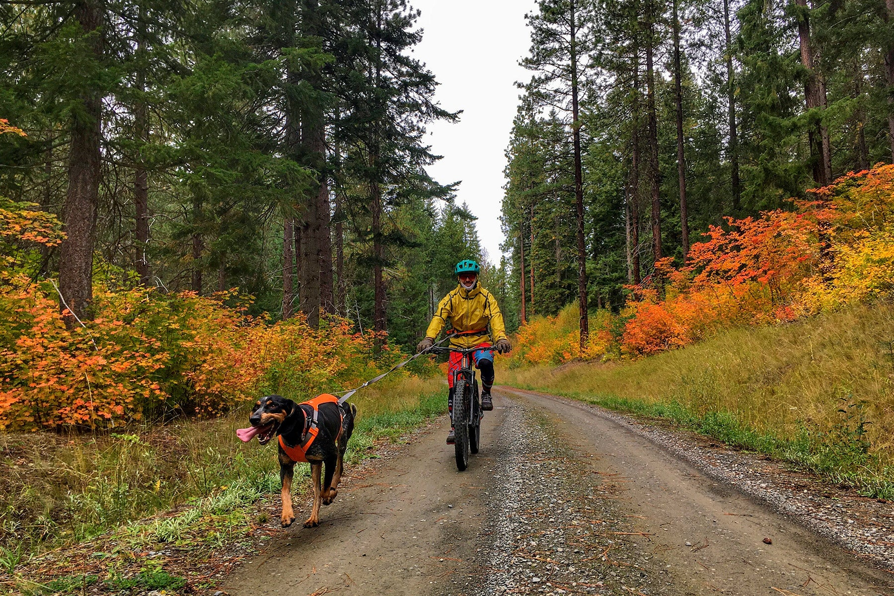 Human bike-joring with dog on a dirt road with autumn foliage