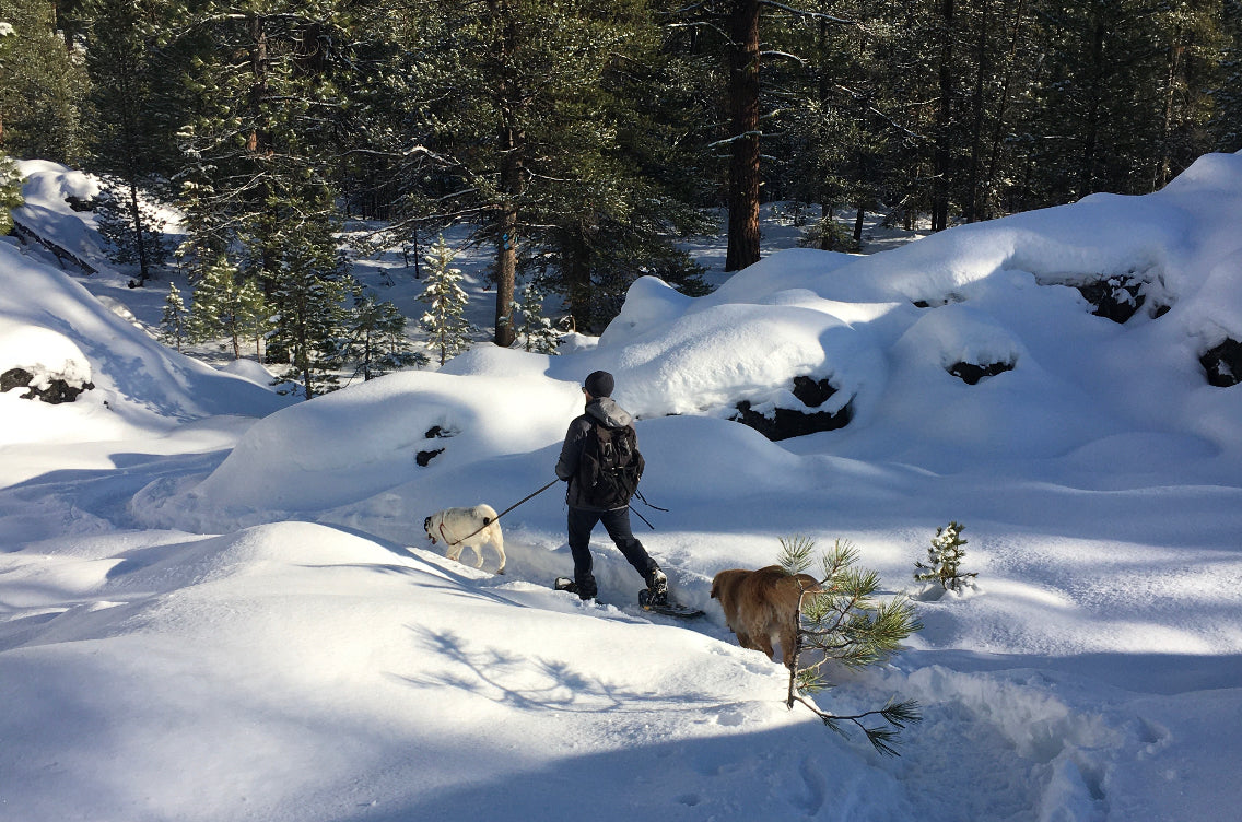Human walking with two dogs in the snow