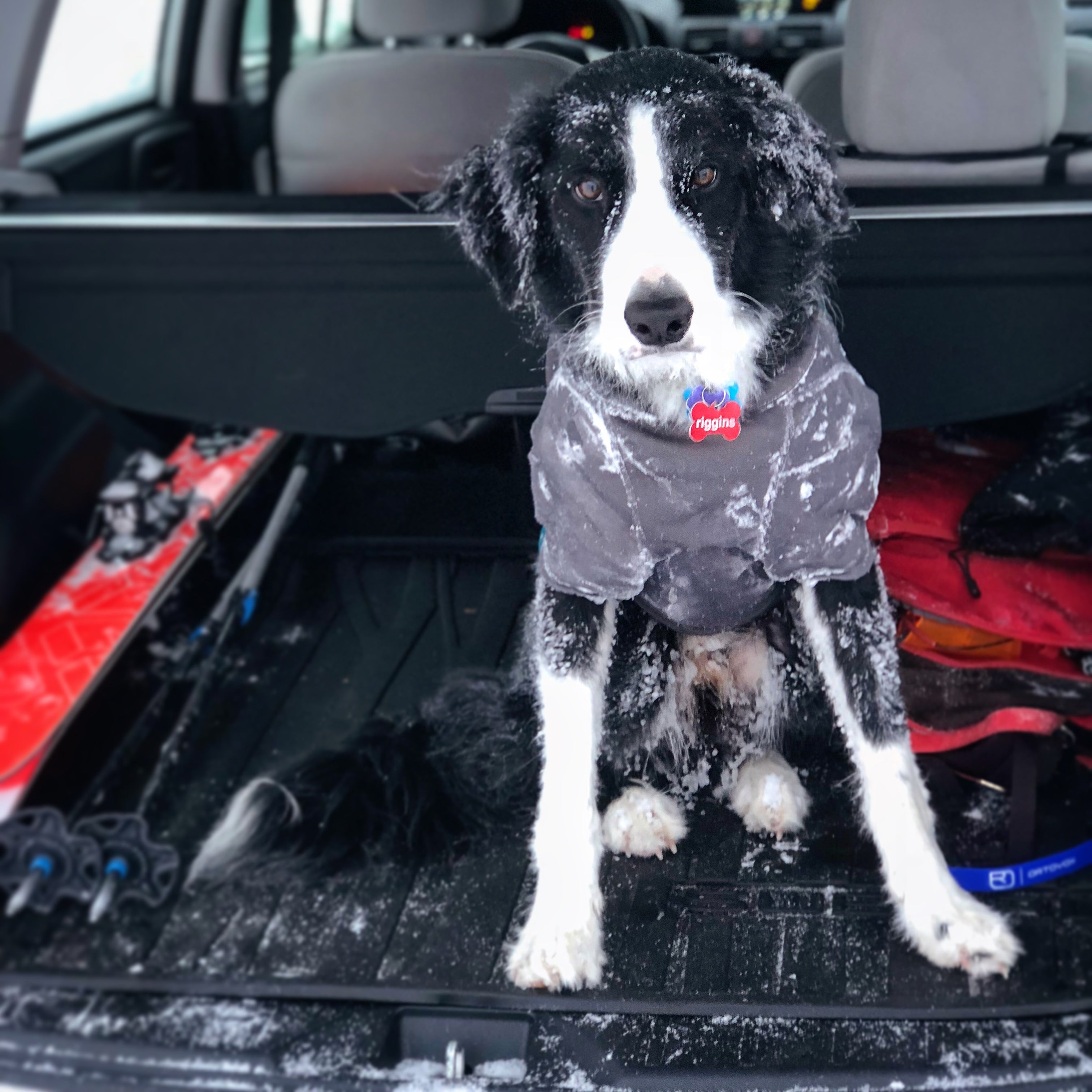 Riggins in back of car covered in icicles after skiing.