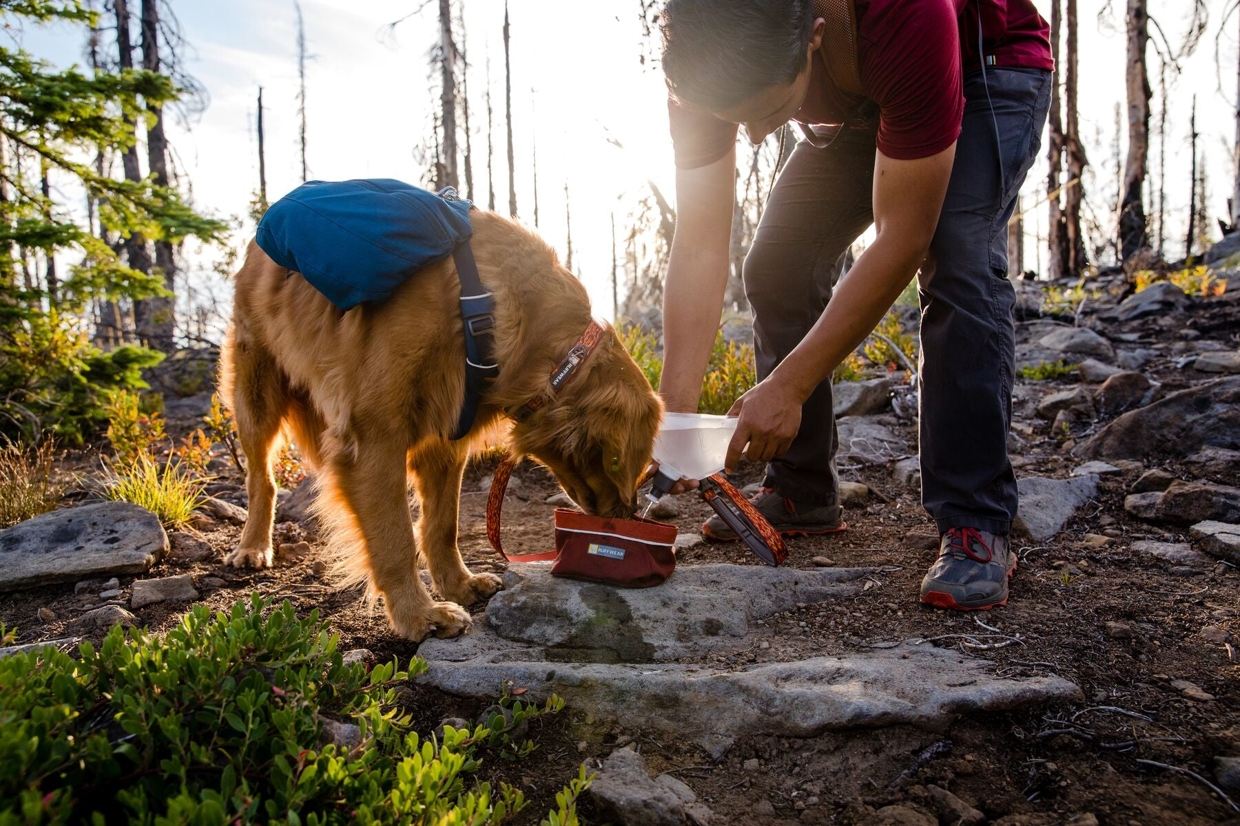 Dog in front range day pack drinks out of quencher packable dog bowl on trail in Jefferson wilderness.