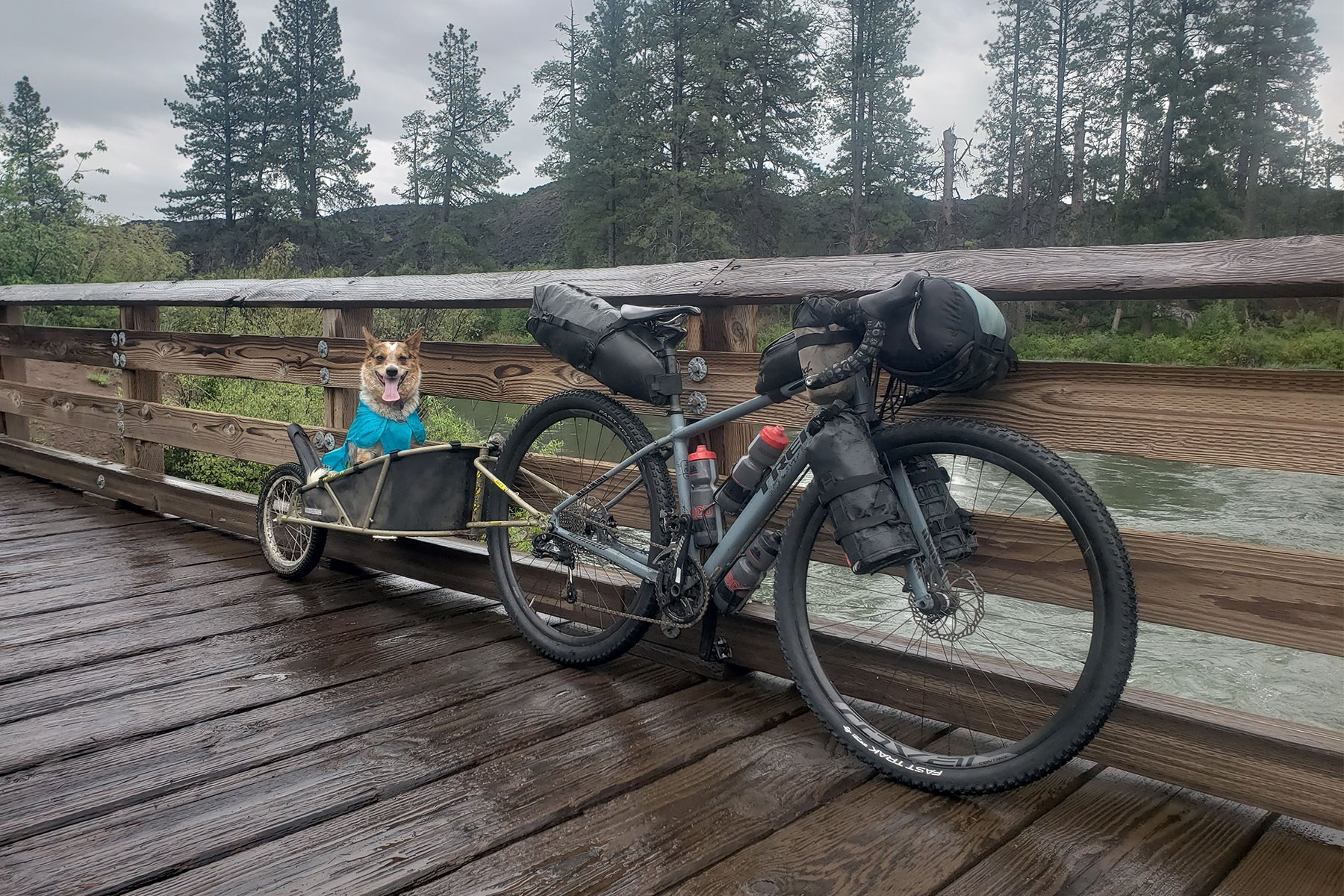 Emma in the trailer behind the gravel bike loaded up for bikepacking on a wood bridge in Central Oregon.