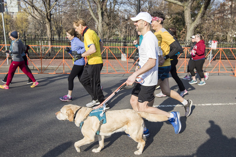 Runner with lab in Unifly harness runs in running race.