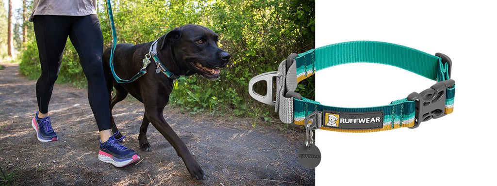 Dog walks on trail wearing web reaction collar and matching Crag Leash.