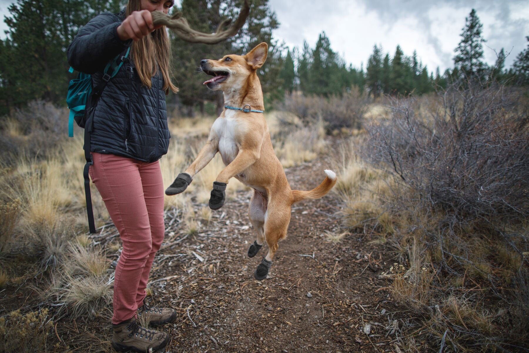 Human holds up stick while dog in summit trex waterproof dog shoes jumps up to grab it.