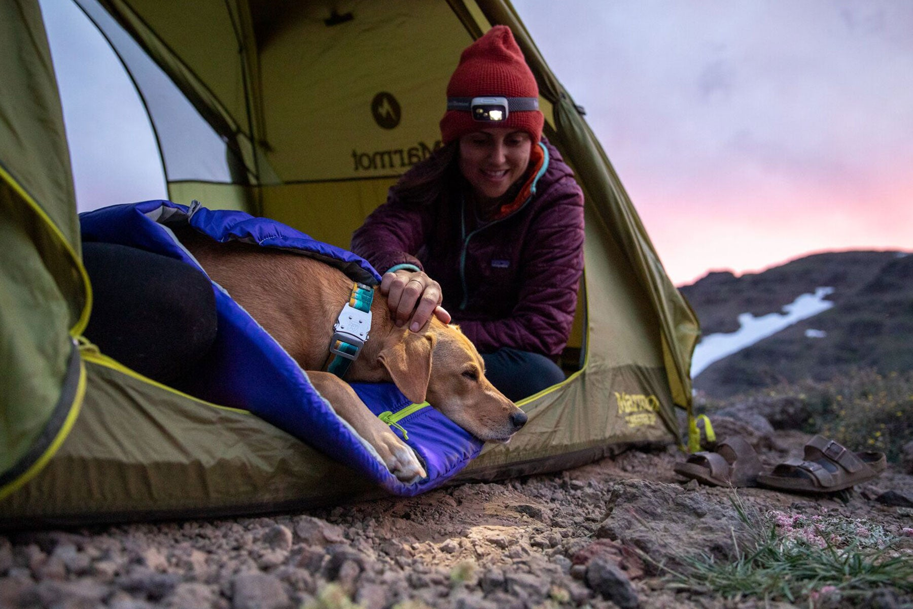 Dog and Human in camping tent at sunset