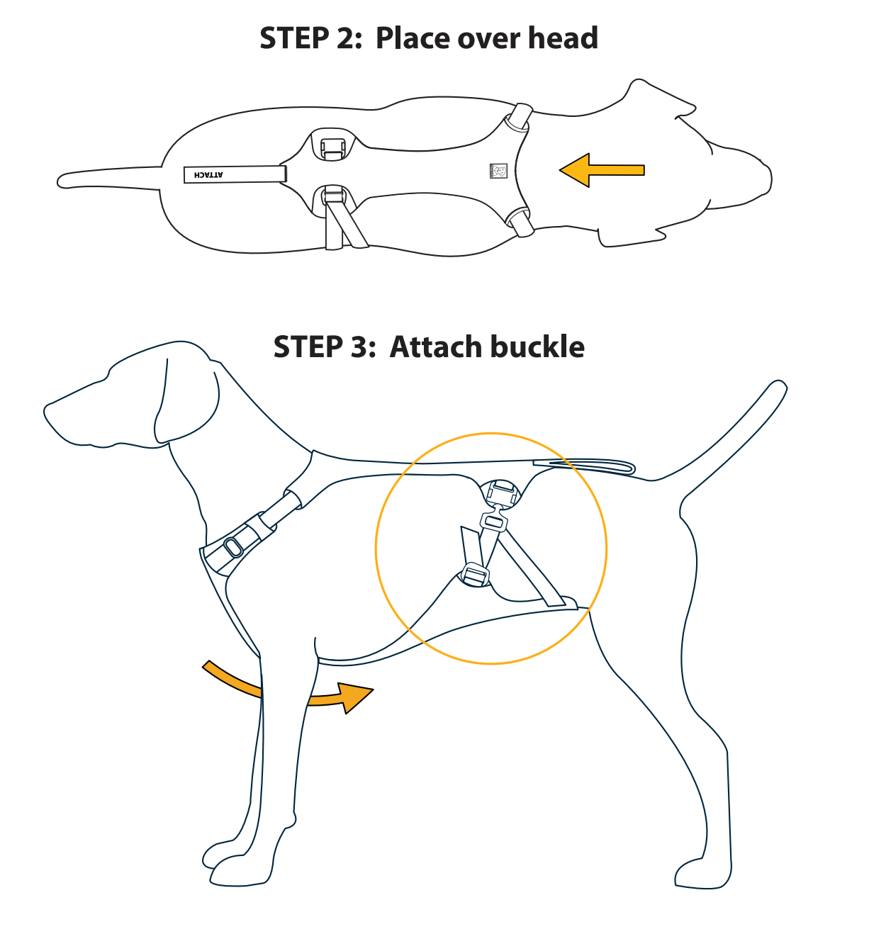 Step 2: Put on Dog and Step 3: Attach buckle