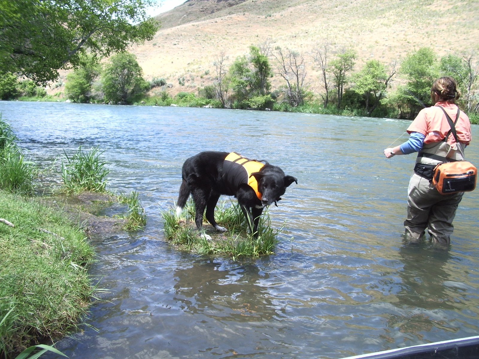 Dove and her dog Sierra fishing in a river