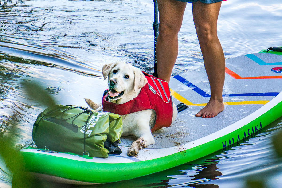 Baylor in Float Coat Dog life jacket lays at Mallory's feet on a SUP.