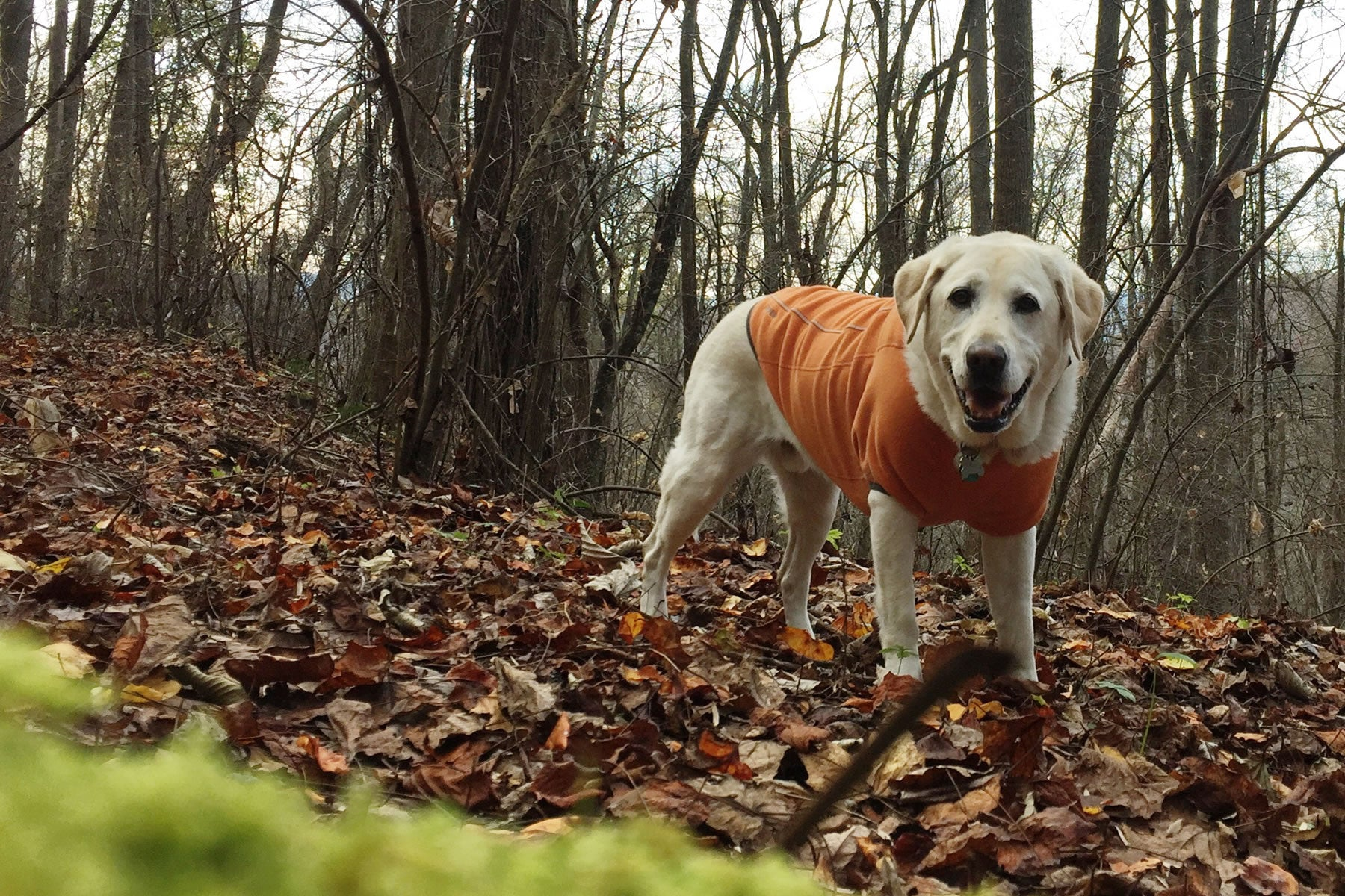 Baylor in Climate Changer Fleece Jacket stands in a pile of leaves in the woods.