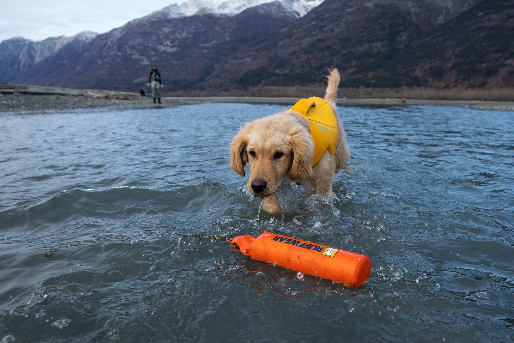 Sammy wades into the water to retrieve a Lunker Floating Throw Toy.