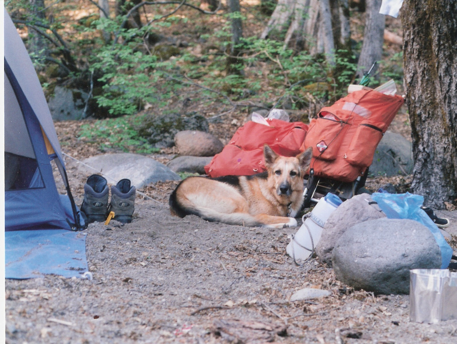 Jerry curled up next to the tent amidst all the gear.