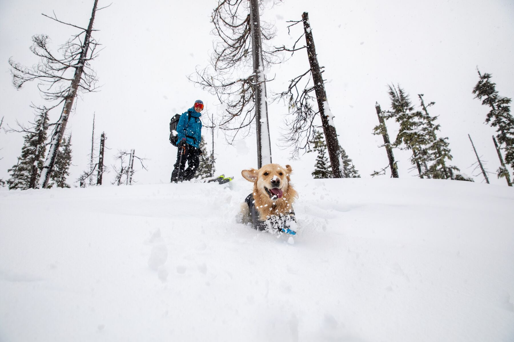 Millie in polar trex boots charges downhill in deep snow.