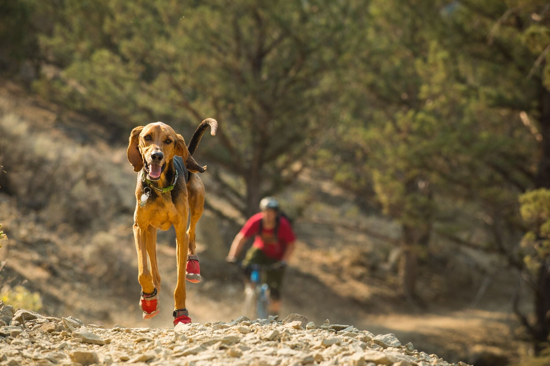 Dog wearing dog boots on hot rocky trail with person mountain biking in background