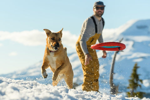 Dog jumps for hydro plane dog frisbee while playing in snow.