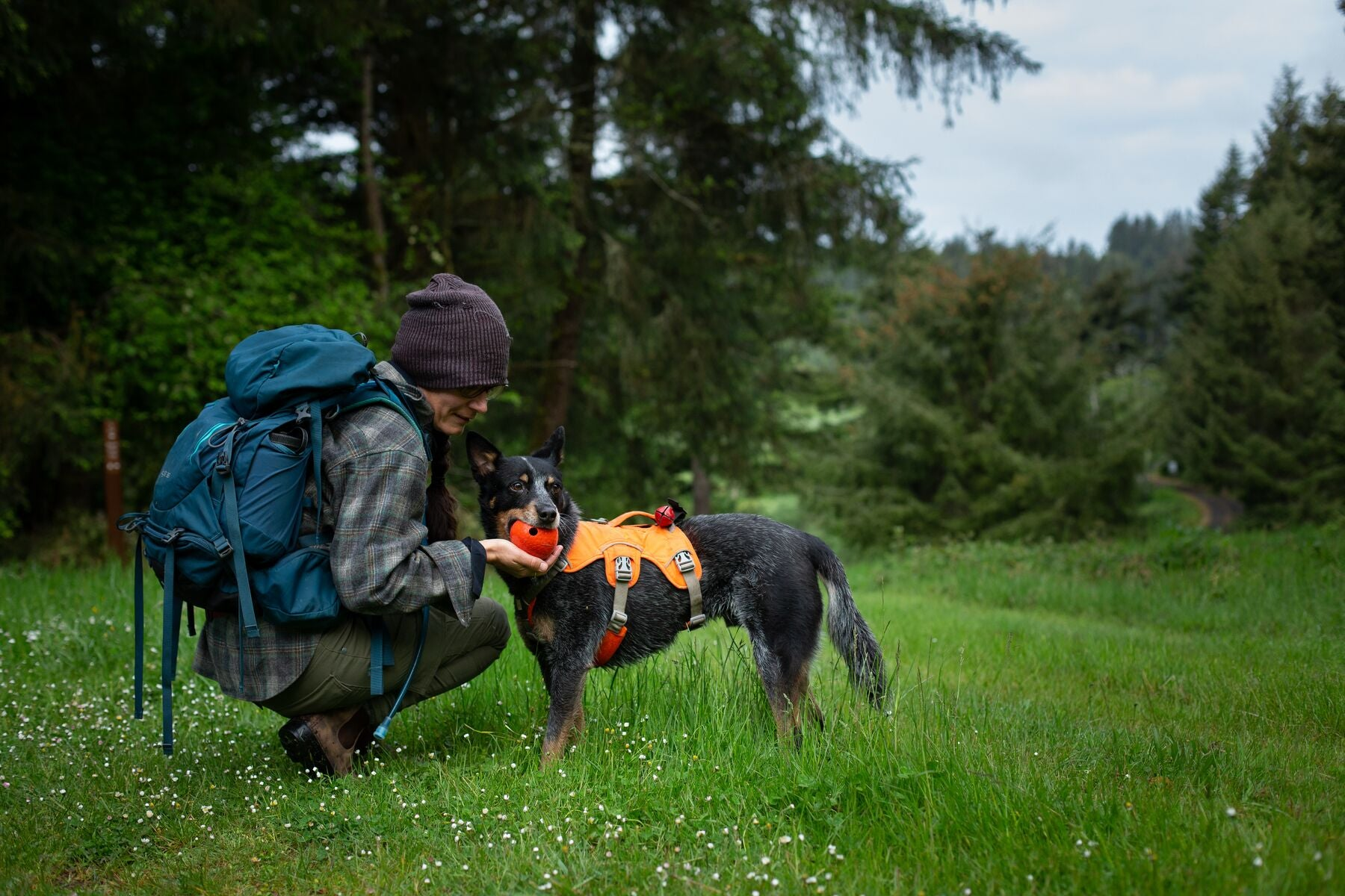 Handler and Rogue Dog wearing the high-vis web master