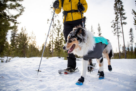 Dog in Cloud Chaser Jacket with Polar Trex boots.