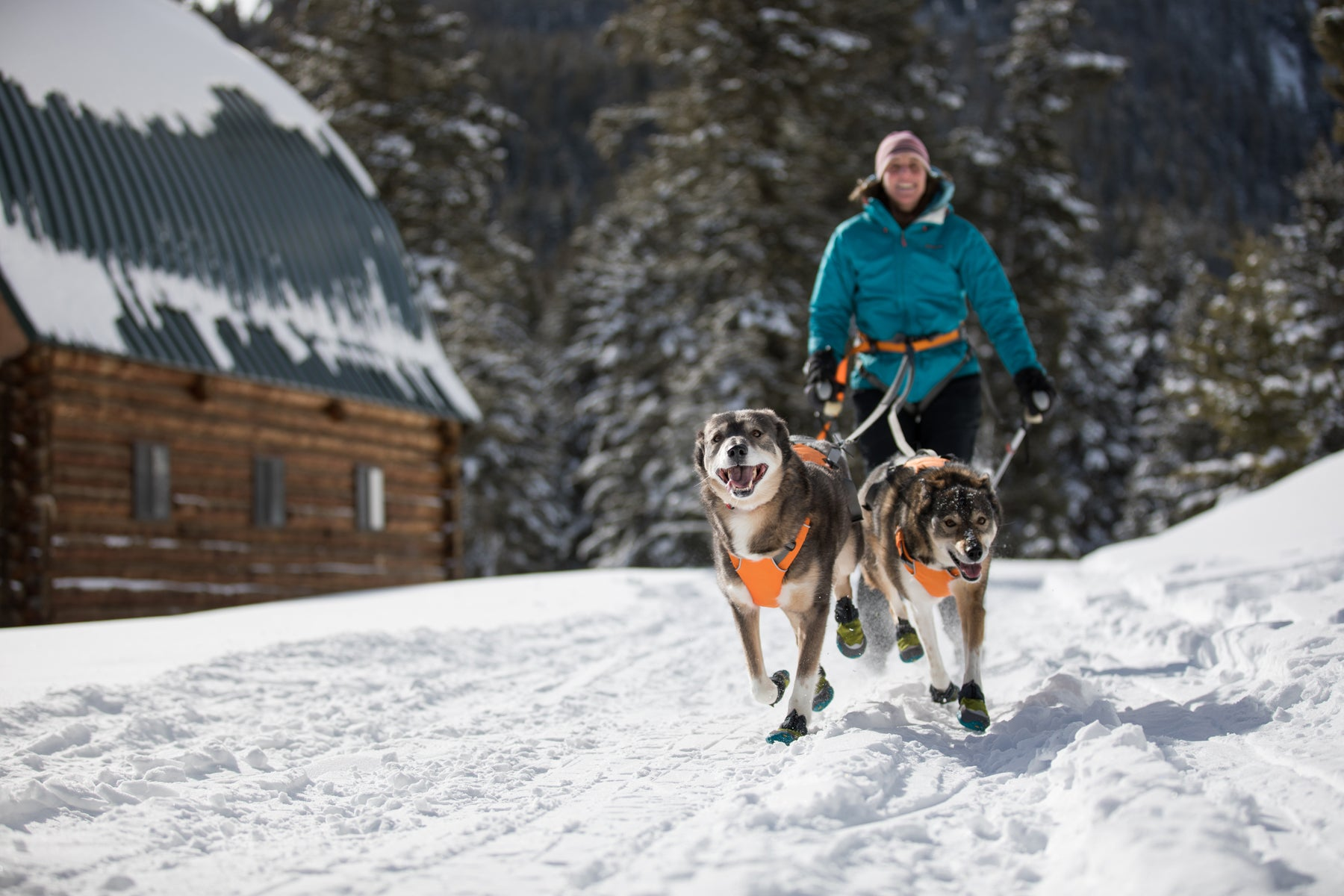 Two dogs running in Polar Trex dog boots on snowy trail towing Darcie on skis behind them.