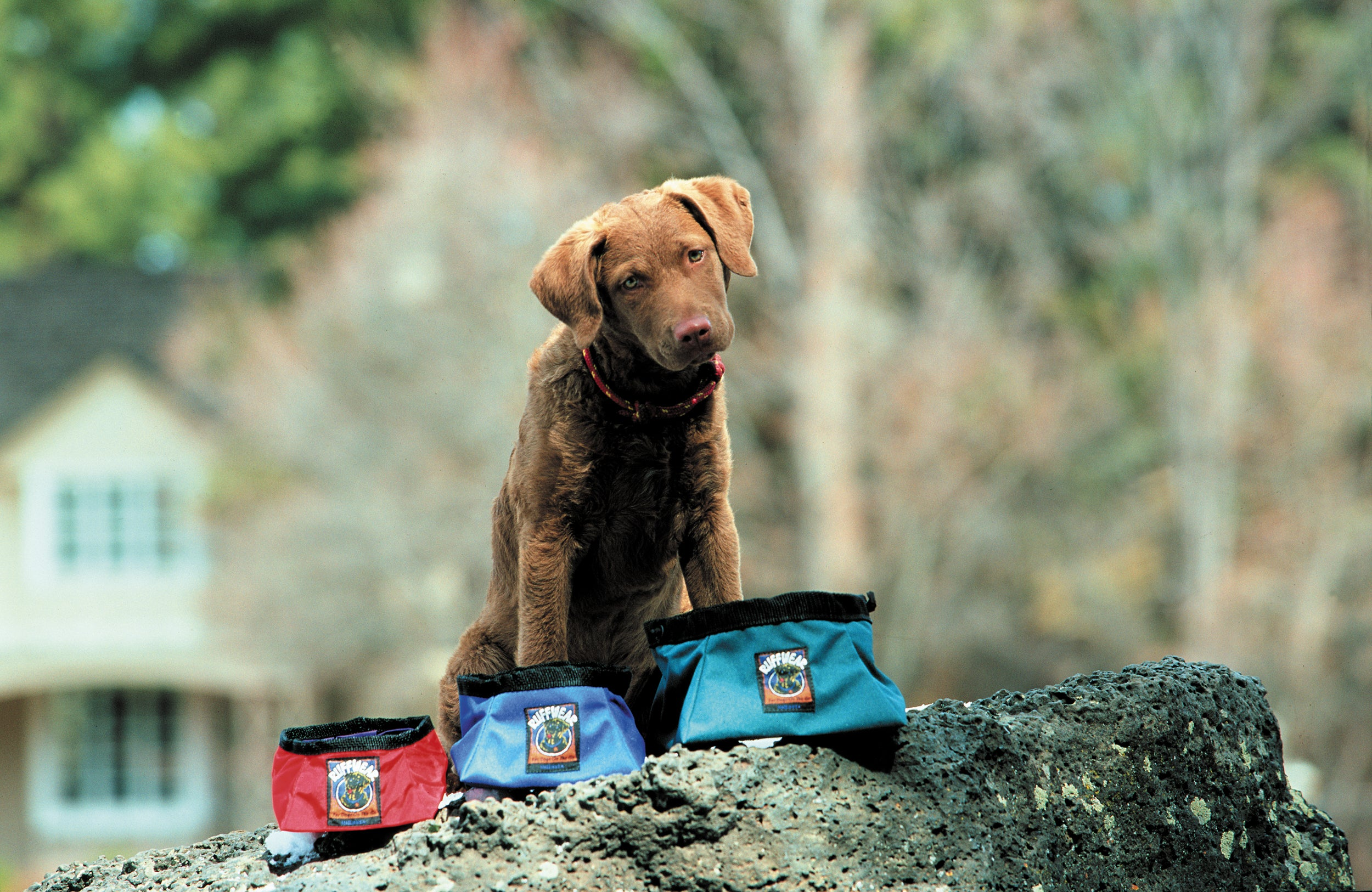 A puppy with three sizes of the original ruffwear packable dog bowls.