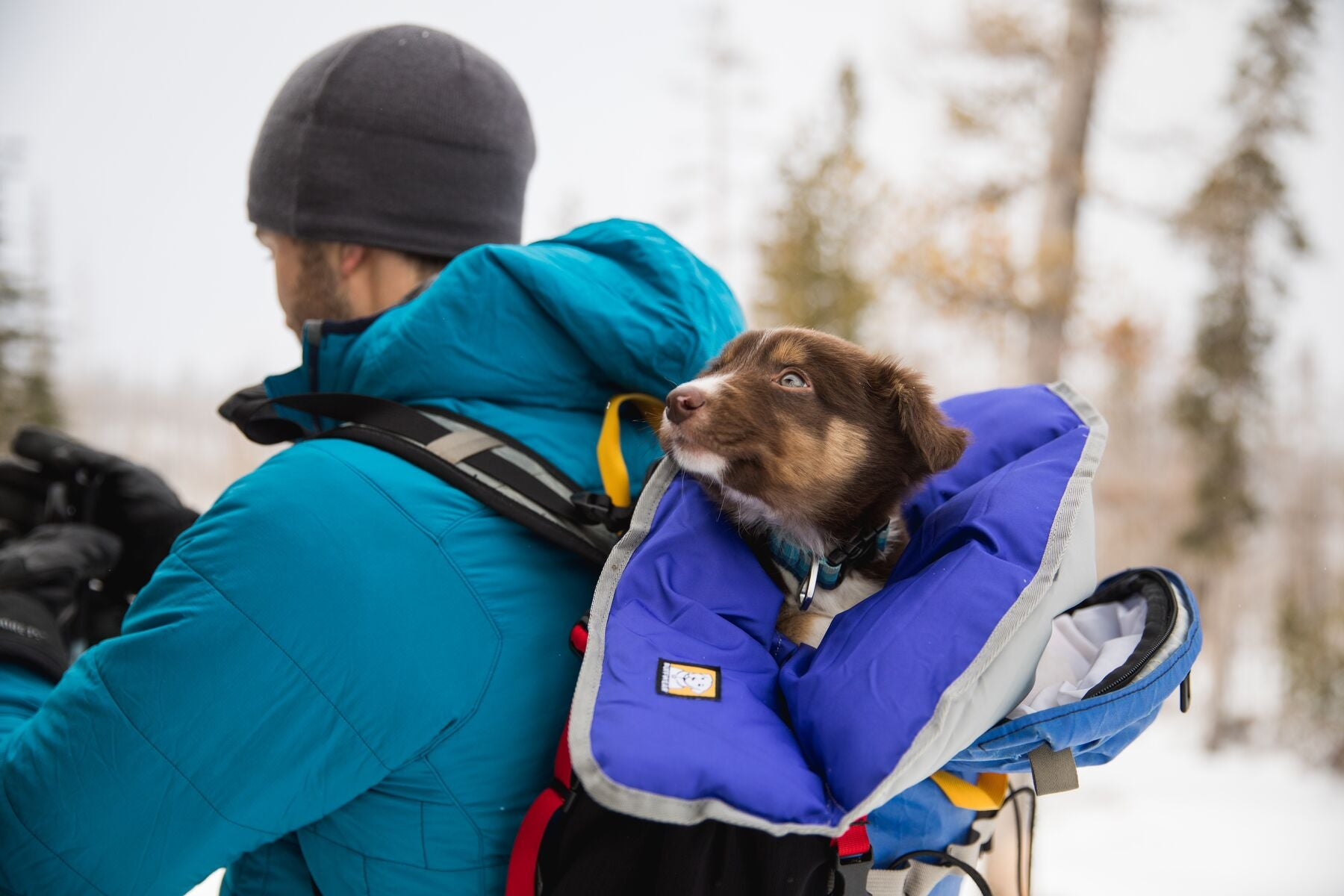 Puppy wrapped in clear lake blanket carried in backpack.